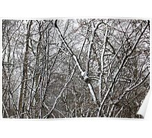 Wintery forest Poster