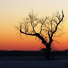 Beyond the Sunset by lorilee