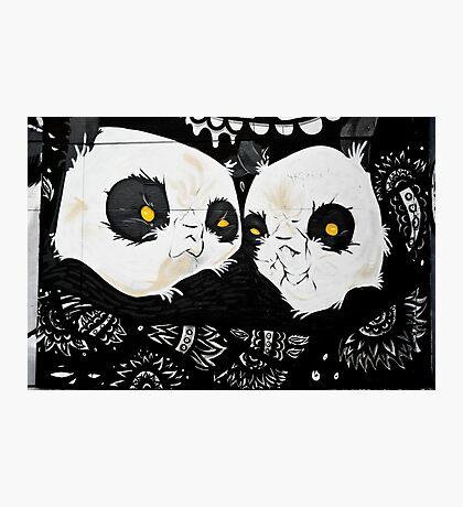 Graffiti pandas Photographic Print