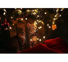 Christmas Kitties Photographic Print