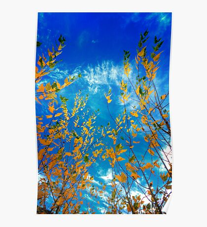 Looking up to Fall Poster