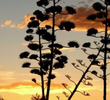 """""""Garingbome"""" Silhouette... The Sisal Plant (Captured from my backyard) Sticker"""