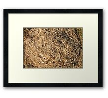 Top view on the dry grass of the land Framed Print