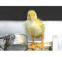 I'm Just Ducky! Photographic Print