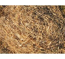 Top view on the dry grass of the land Photographic Print