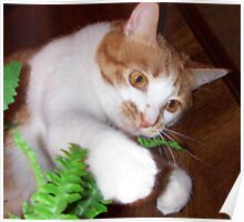 Molly Playing With A Silk Fern Poster