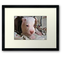 Puppy Power Framed Print