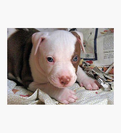 Puppy Power Photographic Print