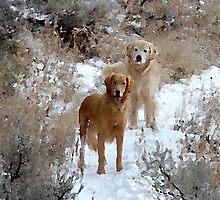 Hiking in Jackson, Wyoming by ElfinYeti