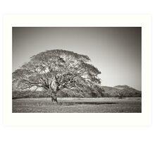 Rafiki's Tree Art Print