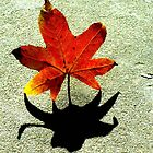 Leaf and Shadow by carol selchert