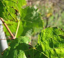 Vines by Cheryl Parkes