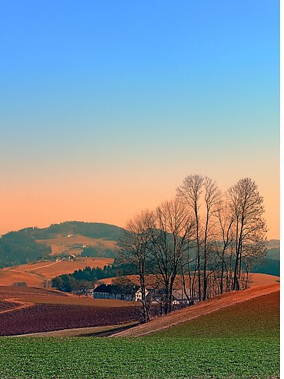 Trees, panorama and sunset   landscape photography by Patrick Jobst
