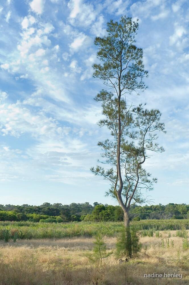 Carine wetlands by nadine henley