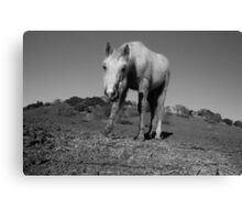 Horse in Bay Area Canvas Print