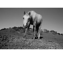 Horse in Bay Area Photographic Print