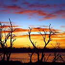 Yangebup Lake - Western Australia  by EOS20