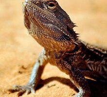 Eastern Bearded Dragon (Pogona Barbata) by Darren68
