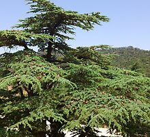 a wonderful Algeria landscape by beautifulscenes