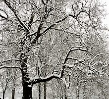 Fabulous snow laden tree in Christchurch Meadows, Oxford by Zoe Power