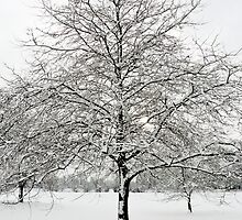 Wintery tree in Christchurch Meadows, Oxford by Zoë Power