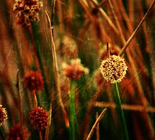 Fluffy Little Seeds by reflector