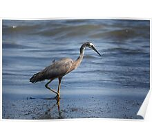 Heron In Shallow Waters Poster