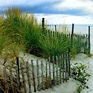 Sea grass at Cape May, N.J.  by DaveHrusecky