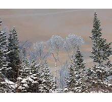 Frost on the Boreal Photographic Print