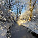 Winter Shine by Jo Nijenhuis