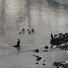 Great Cormorants freezing 2 by BrittArnhild