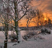 A Winter Sun by Panalot