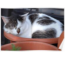 What Strange Plant is Growing in that Pot??? Poster