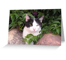 Cat on a tiled roof Greeting Card