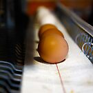 Brown and White Eggs by BigD