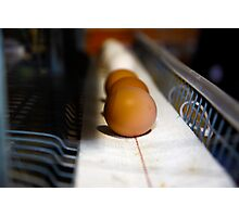 Brown and White Eggs Photographic Print