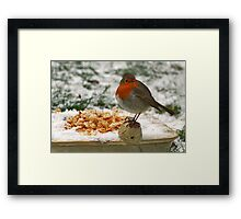 Robin, a guest in our garden Framed Print