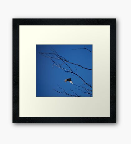 Flying Away... Framed Print