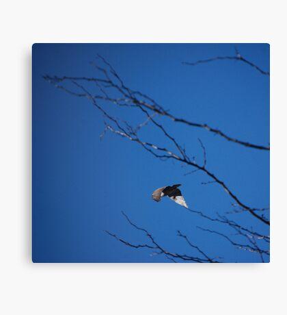 Flying Away... Canvas Print