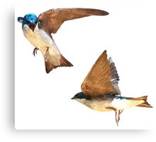 Flying Tree Swallows Canvas Print