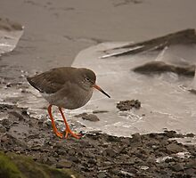 redshank on ice by Jon Lees