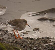 redshank on ice by Jon Lees