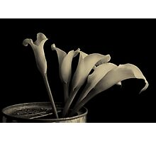 Canned Callas Photographic Print