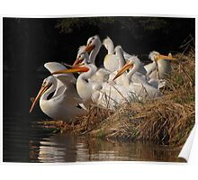 A Squadron of Pelicans Poster