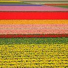 Field of flowers by roumen