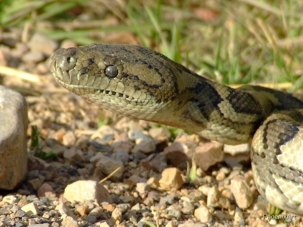 Carpet Snake  by PhoenixArt