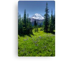 Trail to Dewey Lake - Mt. Rainier Natl. Park Canvas Print