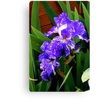 Multi-colored Iris Canvas Print