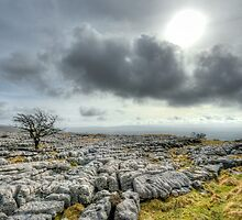 Lonely Tree - Ingleton, North Yorkshire by craig sparks