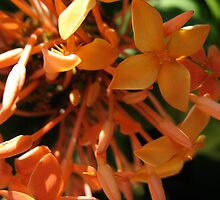 Tangerine Dream Flowers by MarianBendeth